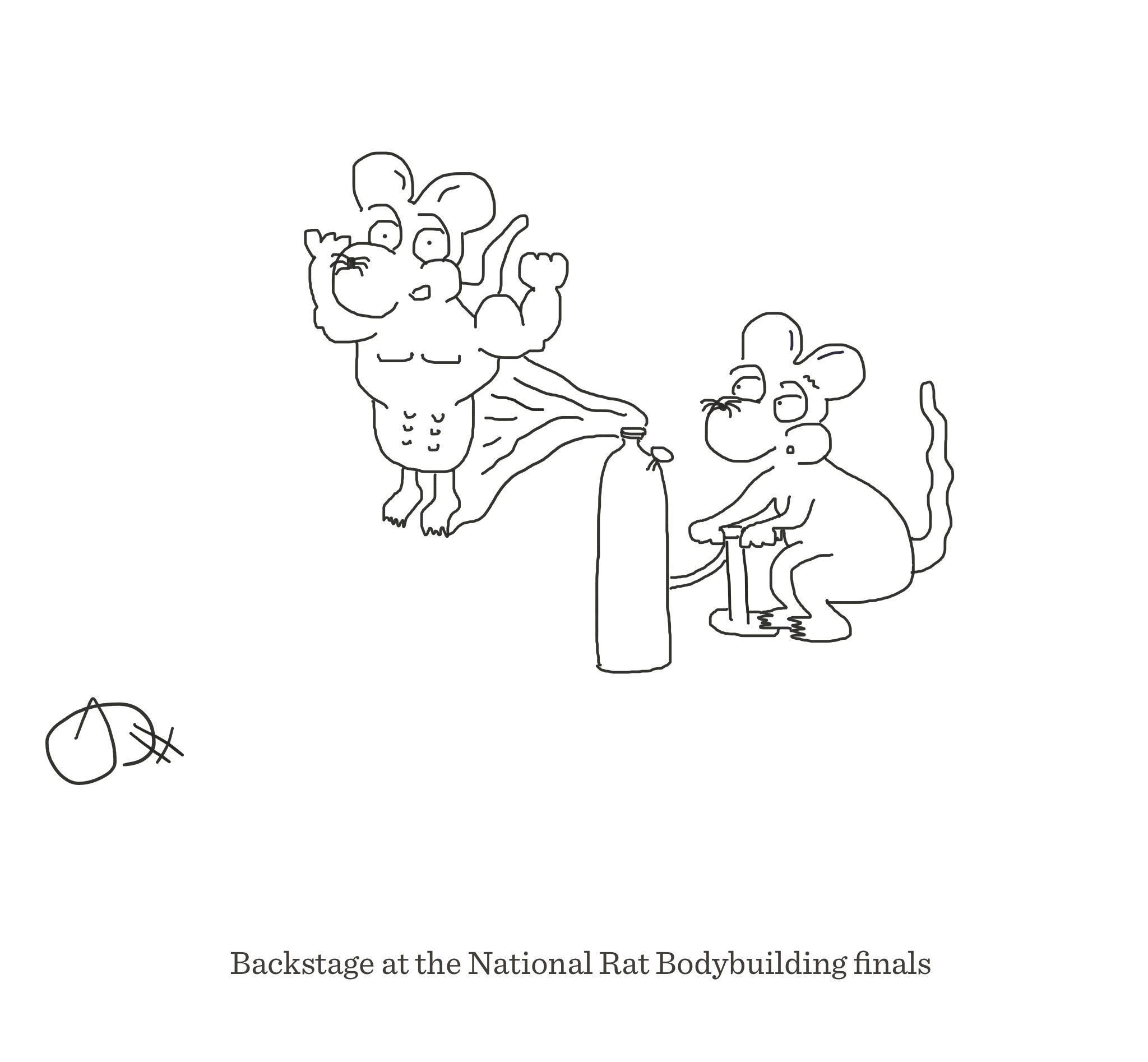 Rat Bodybuilding finals, The Happy Rat, Sarah Hunt